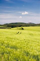 Getreidefeld in Thüringen