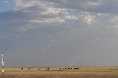 Horses in kazakh steppe