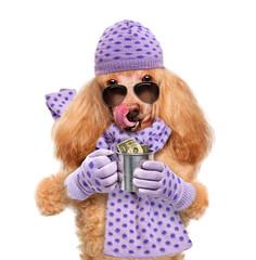 money dog holding
