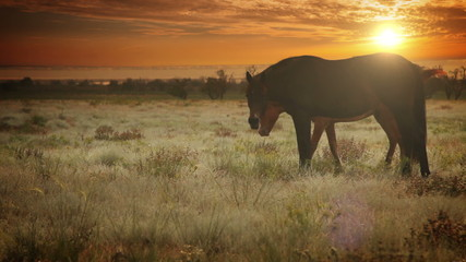 Red color Mare with young Foal graze grass with evening sun rays