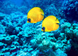 Group of coral fish  in water. - 60962801