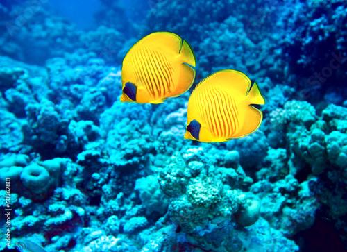 Foto op Plexiglas Water planten Group of coral fish in water.