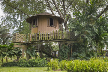 Tree House At A Tropical Forest