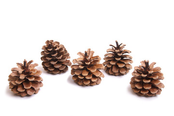 five fir cones