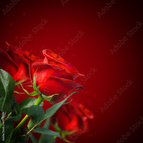 background with beautiful red roses