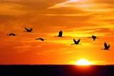 WADING BIRDS - Cranes / Żurawie