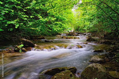 stream in the tropical forest - 60977847