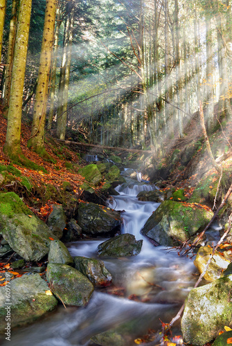 river illuminated by sunbeam in the forest