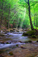 river with sunbeam in the forest