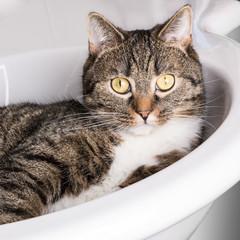 Katze im Waschbecken