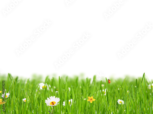 Abstract floral background on white background