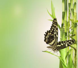 papillon sur bambou