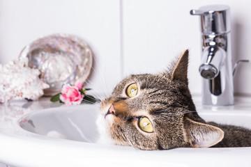 Katze im Waschbecken mit Dekoration