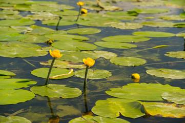 Lake with yellow Brandy-bottles