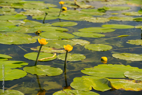 Lake with yellow Brandy-bottles