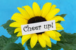 Cheer up card with sunflower