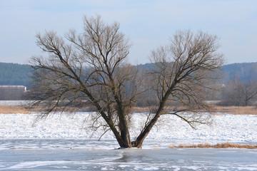 Deich an der Oder Hochwasserschutzgebiet