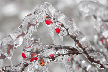 Frozen twig in the ice