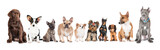 Fototapety group of different dogs