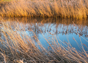 Reeds at both sides of the stream