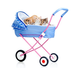 kittens in buggy