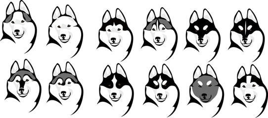 various color options head husky