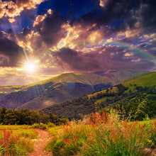 de pins à proximité de la vallée dans les montagnes sur la colline sous soir s