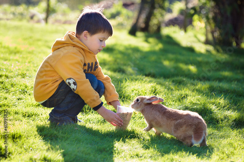 Little boy feeding rabbit in farm