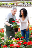 Woman choosing flowers in a greenhouse