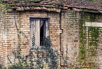 vecchio stabile assalito dalla vegetazione