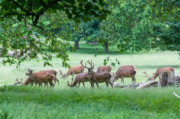 group of deer's in trees