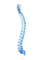 3d rendered illustration - glass spine