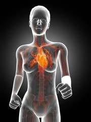 3d rendered illustration - running womans heart