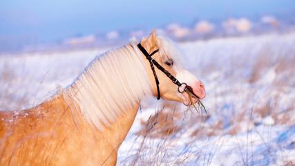 Portrait of a beige pony