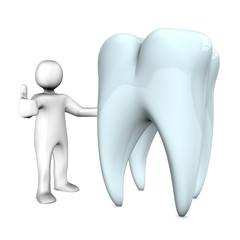 Manikin Tooth Ok