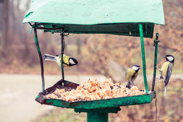 Birds on the bird feeder