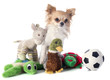 chihuahua and toys