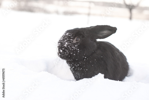 hare in winter