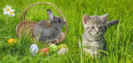 a cute easter rabbit and kitten