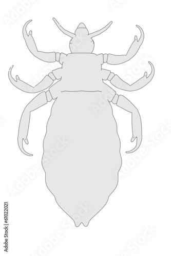 cartoon image of louse parasite