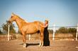 junge weibliche reiterin trainiert ihr pferd im freien im sommer - 61025654
