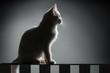 Portrait of white kitten on black background