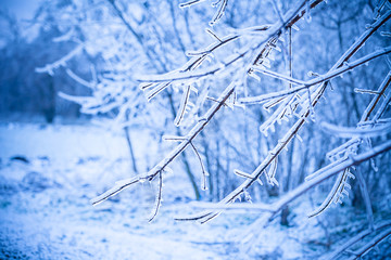 frosty tree branch in winter