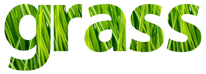 Green Grass Words Concept Isolated On White