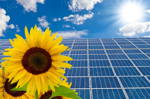 New solar cells and sunflowers