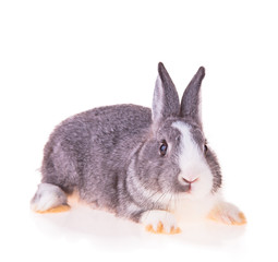 Easter baby rabbit on white background