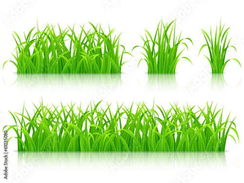 Collection of fresh green grass.