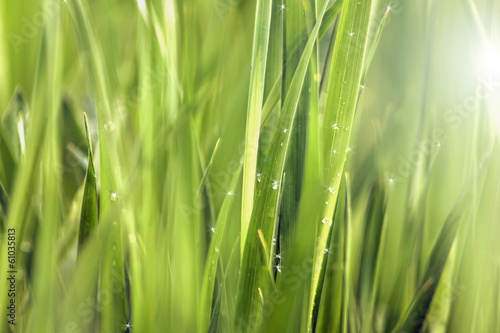 Background of Green Grass Meadow with Shining Rain Drops