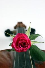 Rose liegt auf Griffbrett von einer Geige