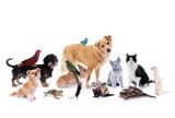 Fototapety Gruppe verschiedene Haustiere